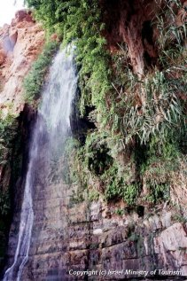 Waterfall in Nahal David (David's Stream)