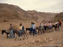 Judean Desert - Tourists donkey-riding